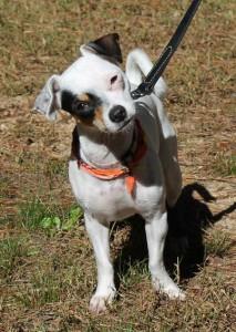 Adoptable dog Paisley